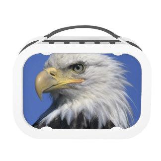 bald_eagle_haliaeetus_leucocephalus_wild_lunchbox-rb7efc3f0b2134bbdae814122b14d0d09_iqh0d_8byvr_324